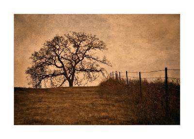 Tree and Fence II