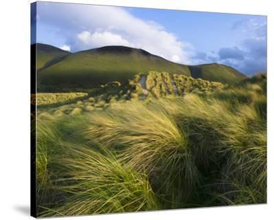 Ross Behy Sand Dunes, Ireland III