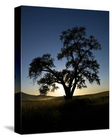 La Palouse Steptoe Tree Silhouette