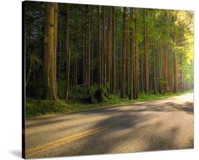 Hoh Rain Forest, Upper Hoh Road