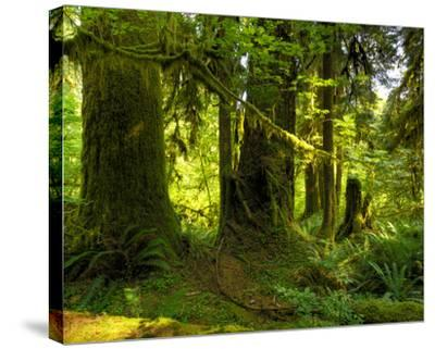 Hoh Rain Forest II