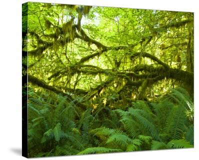 Hoh Rain Forest III
