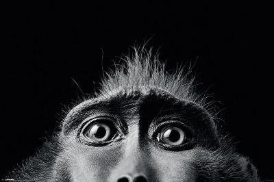 Tim Flach Monkey Eyes
