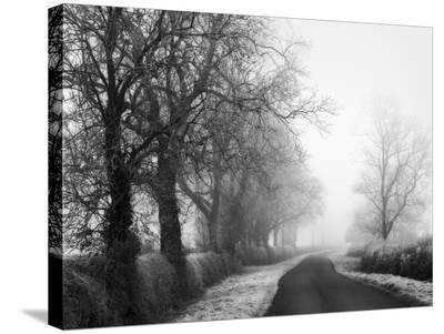 Misty Tree-Lined Road