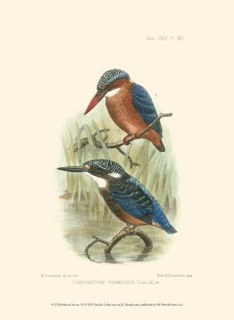 Birds in Nature VI
