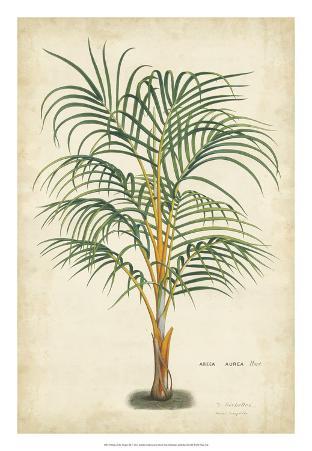 Palm of the Tropics III