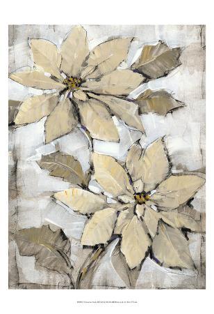 Poinsettia Study II