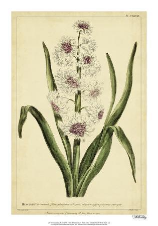 Hyacinthus, Pl. CXLVIII