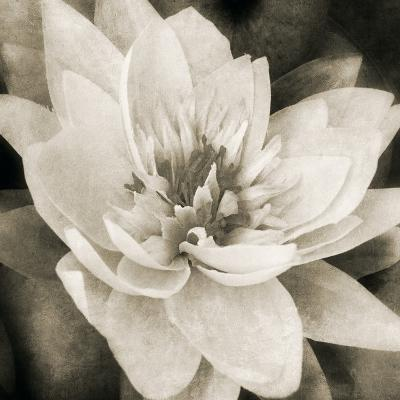 Soft Water Lily
