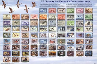 """U.S. Migratory Bird Hunting and Conservation Stamps """"Duck Stamps"""" Educational Poster"""