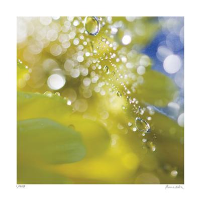 Floral Elements 16