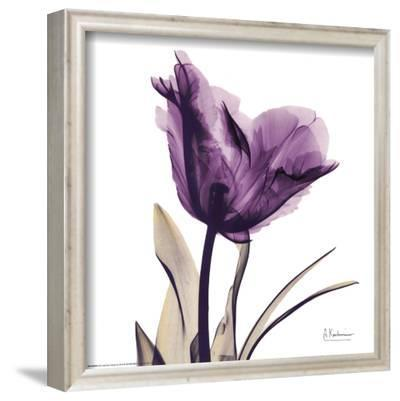 Royal Purple Parrot Tulip