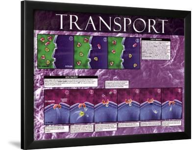 Active & Passive Transport
