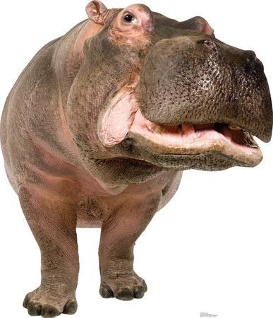 Hippopotamus Lifesize Standup