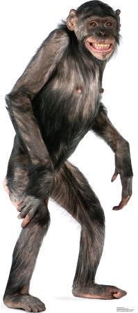 Chimpanzee Lifesize Standup