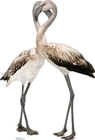 Flamingos - Love Birds Lifesize Standup