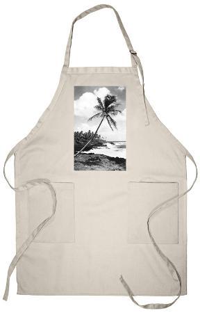 Hawaii - Palms along the Beach Apron