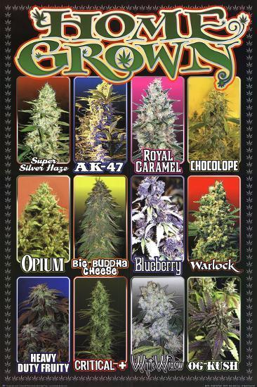 Home Grown Pot Marijuana Strains Posters At Allposters Com