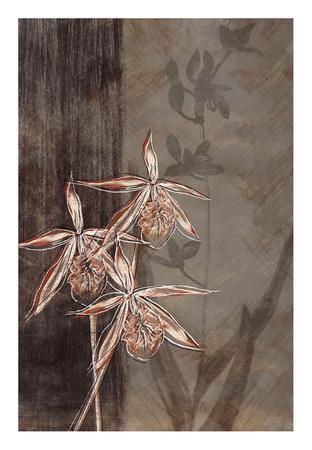 Orchid Sketch II