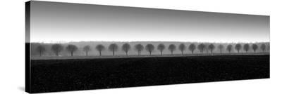 Dappled Morning Fields
