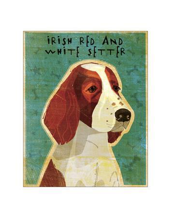 Irish Setter (Red & White)