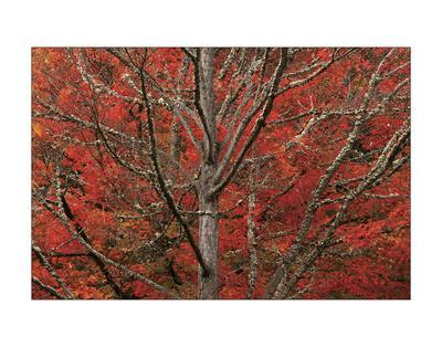 Lithia Park in Fall