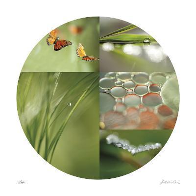 Fluttering Spring Circle