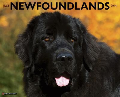 Newfoundlands - 2014 16-Month Calendar