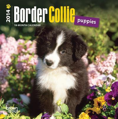 Border Collie Puppies - 2014 Mini Calendar