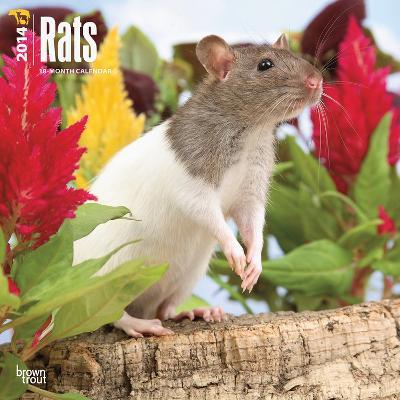 Rats - 2014 Calendar
