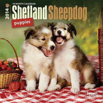 Shetland Sheepdog Puppies - 2014 Mini Calendar