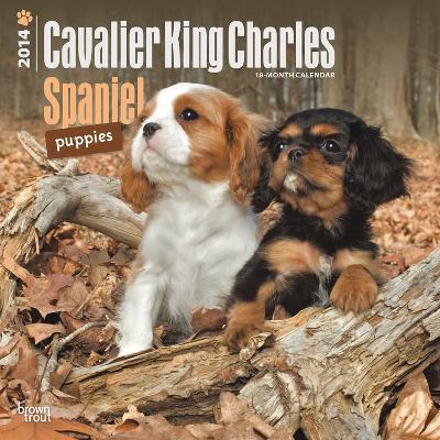 Cavalier King Charles Spaniel Puppies - 2014 Calendar