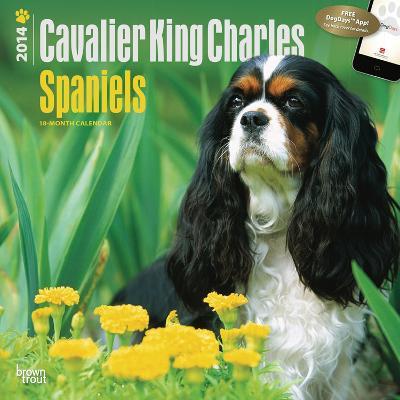 Cavalier King Charles Spaniels - 2014 Calendar