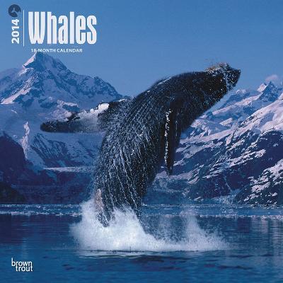 Whales - 2014 Calendar