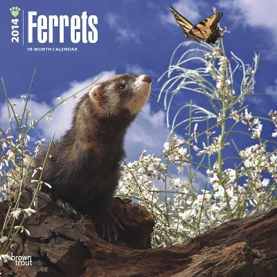 Ferrets - 2014 Calendar