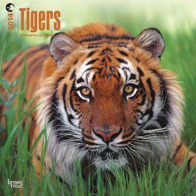 Tigers - 2014 Calendar