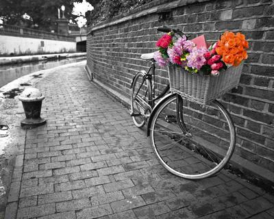 Bicycle of Love I