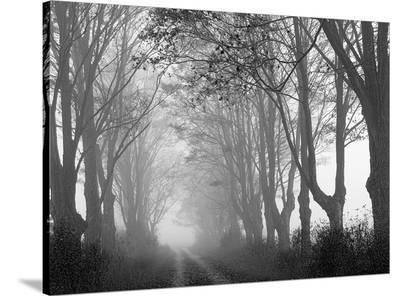 Laneway and Fog