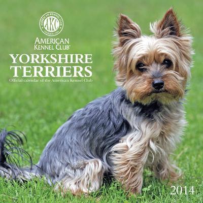 Yorkshire Terriers - American Kennel Club - 2014 Calendar