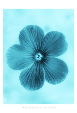 Forget Me Not Blue II