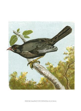Mini Vintage Birds IV