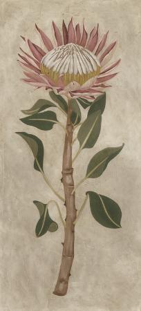 Protea I