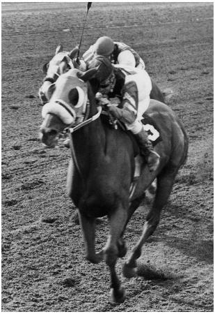Continuous Count Horse Racing Archival Photo Poster