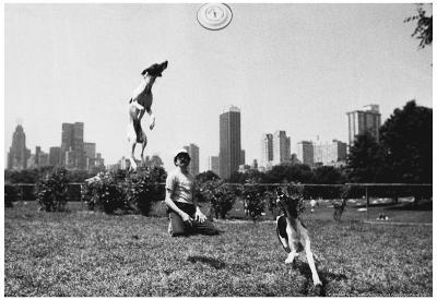 Frisbee Dogs Central Park New York City Archival Photo Poster