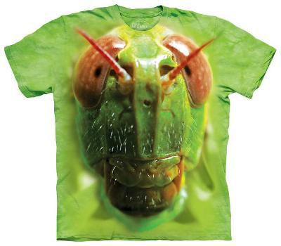 Youth: Grasshopper Face