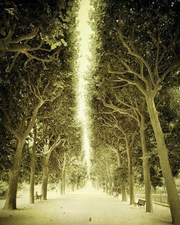 Avenue Shade II