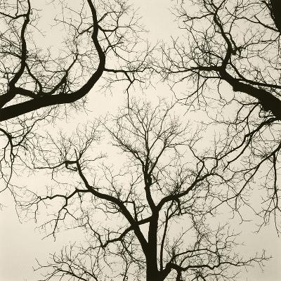Tree Study V