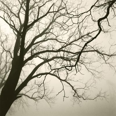 Tree Study VI