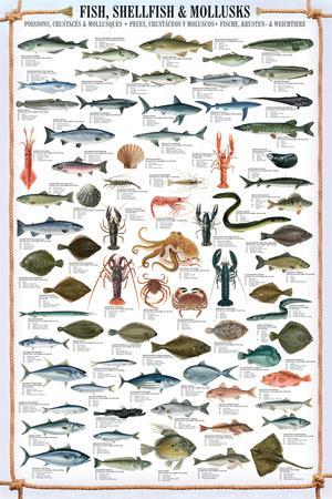 Fish and Shellfish Educational Poster