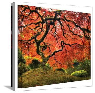 John Black ' Japanese Tree ' Gallery Wrapped Canvas